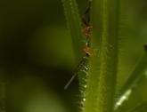 Verscholen insect