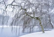 Januari 2015, beetje winter