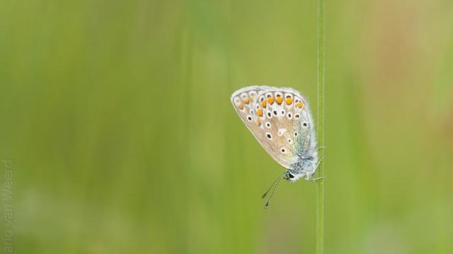 Mei 2015, Vlinders, een paar landschappen, en nog eens vlinders