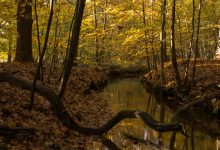 Beekje in Leuvenumse bos