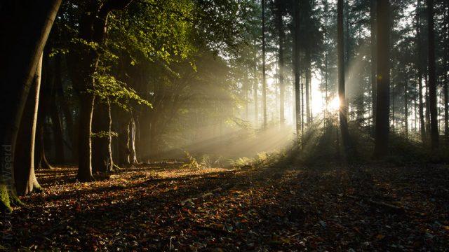 Eind 2017, herfst rond Zwolle